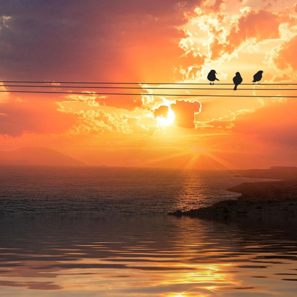 iPhone vakantie shot 3 little birds